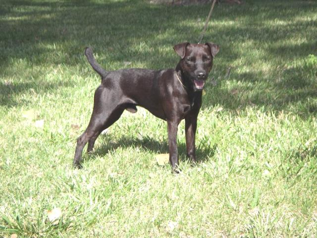 Patterdale Terrier Pictures